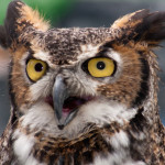 "Blld ""<em>WR – Great Horned Owl 4</em>"" unter <a title=""zum Lizenztext"" href=""https://creativecommons.org/licenses/by/2.0/legalcode"">CC BY 2.0</a> von Virginia State Parks / vastateparksstaff via <a href=""https://www.flickr.com/photos/vastateparksstaff/5761398799/"">flickr</a>"