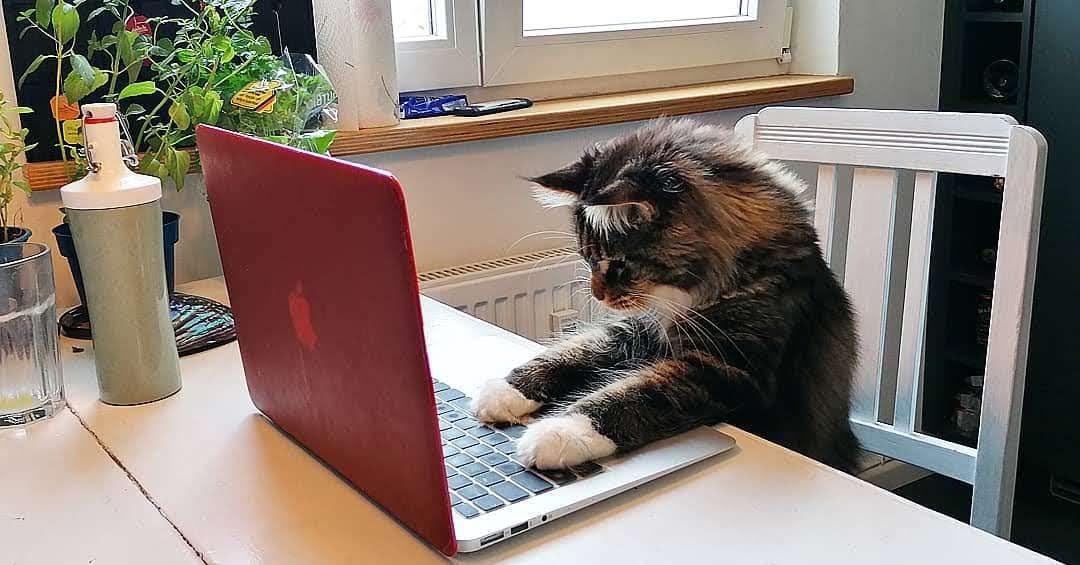 eine Katze arbeitet konzentriert an einem Computer